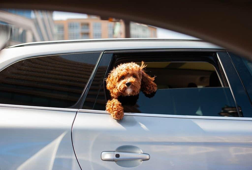אילו מסמכים צריך בשביל לעשות ביטוח רכב אונליין?